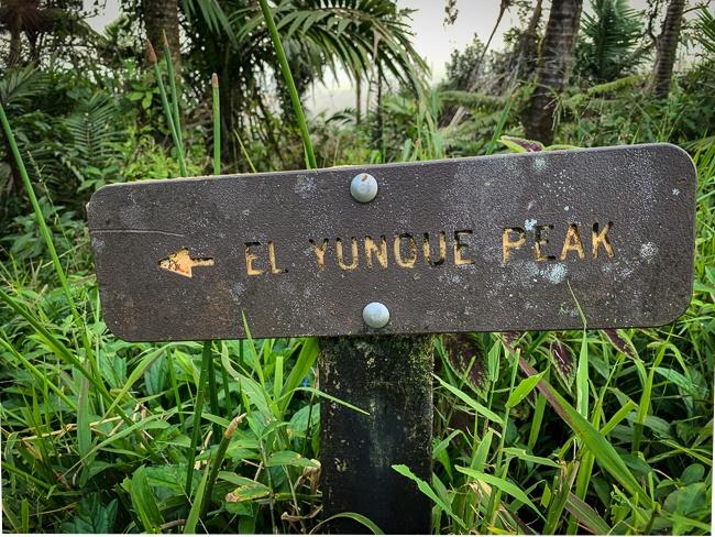 El Yunque hiking